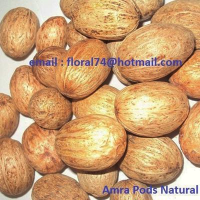 Amra Pod Natural - Bulk Dried Flowers Potpourri Ingredients