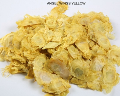 Angel Wings Yellow