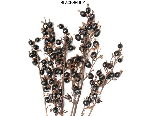 Black Berries Natural - Dried Black berries wholesale supply