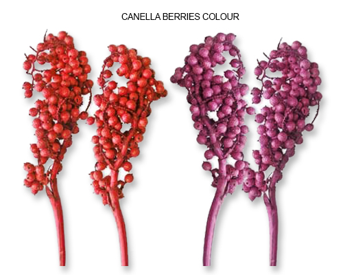 Canella Berries Colour - Bulk Canella Berries Supplies