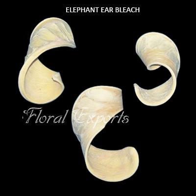 Elephent Ear Bleach