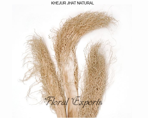 Khejur Jhar Natural - Bulk Khejur Jhar Supplies