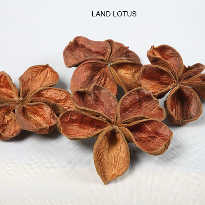 Land lotus flowers bulk dried potpourri wholesale dried exotics land lotus flowers bulk dried potpourri wholesale mightylinksfo