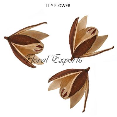 Liy Flowers Natural-Dried Pot pourri