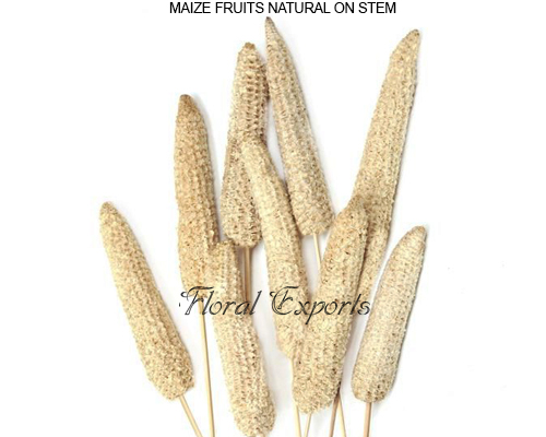 Maize Fruits Natural - Dried Flowers Bulk Supplies