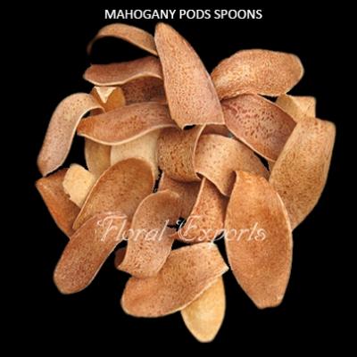 Mahogany Pods Spoons Natural