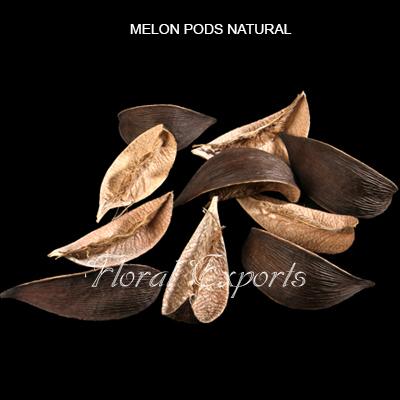 Melon Pods Natural-Bulk Potpourri Supplies