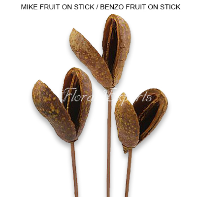 Mike Pods - Benzo Fruit Natural - Bulk Dried Floral Supplies