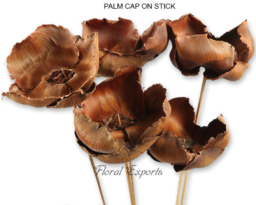 Palm Cap Natural