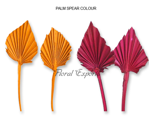 Mini Palm Spear Color
