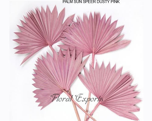 Palm Sunspear Dusty Pink