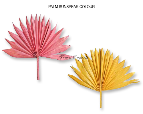 Palm SunSpear Color