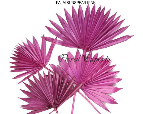 Palm Sunspeer Pink