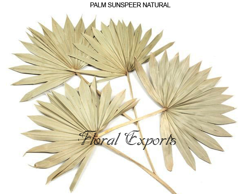 Palm Sun Spear Natural