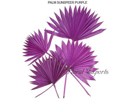 Palmsunspear Purple