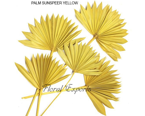 Palm Sunspear Yellow
