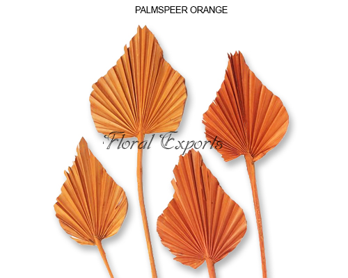 Palm Spear Orange