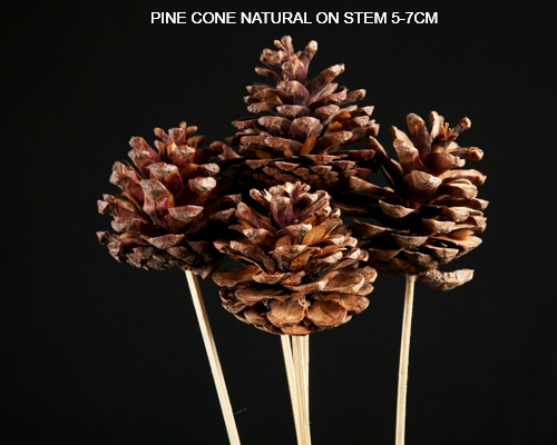 Pine Cone Natural 5-7cm on Stem - Bulk Pine Cone Suppliers