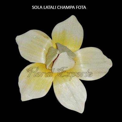 Sola Kanthali Champa Flowers - Sola Flowers Bulk