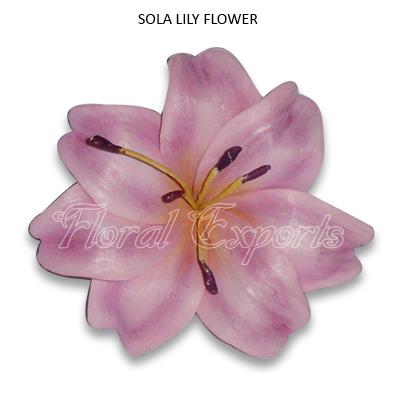Sola Lily Flowers - Tapioca Wood Flowers