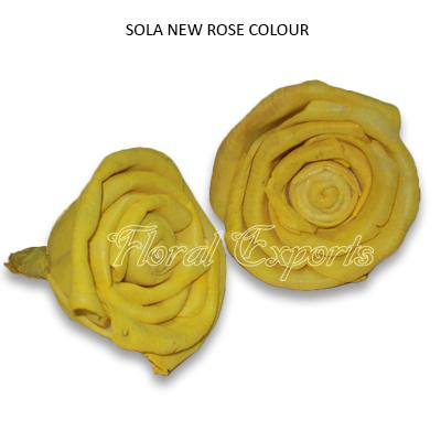 Sola New Rose Colour-Shola Flowers Whlesale