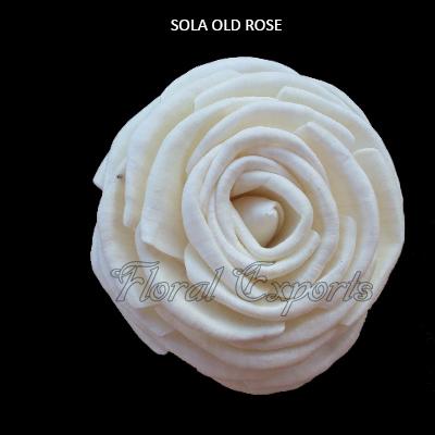 Sola Old Rose Sola Rose Flowers