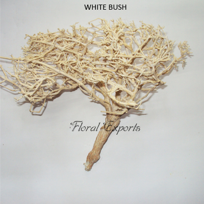 White Bush Natural - Bulk Dried Flowers Suppliers India