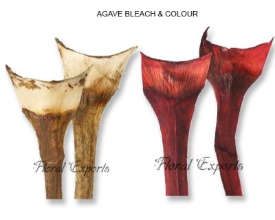 Agave Bleach & Color Medium