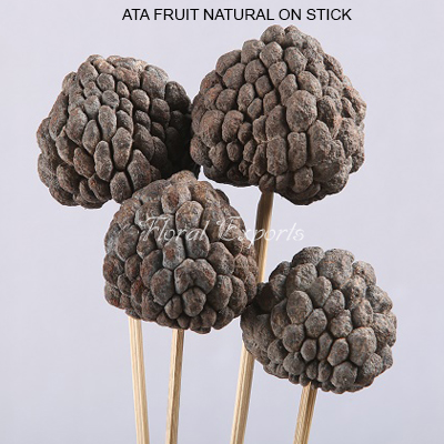 Bulk Ata Fruit Natural on Stem Wholesale