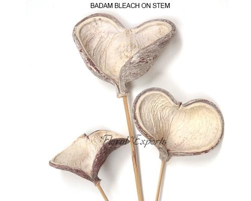 Badam Bleach on Stem