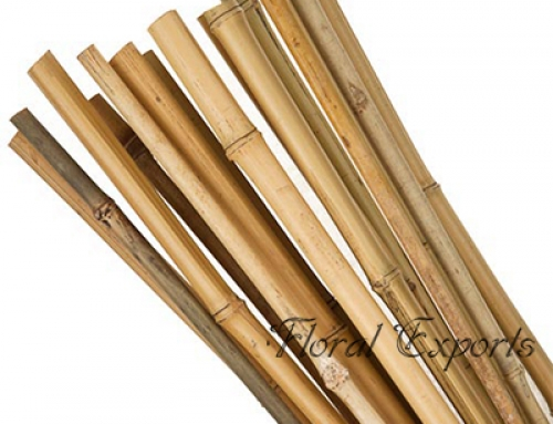 Bamboo Narrow Pole 10′