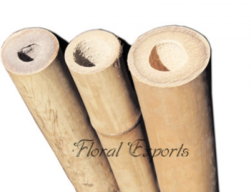 Bamboo Pole Natural