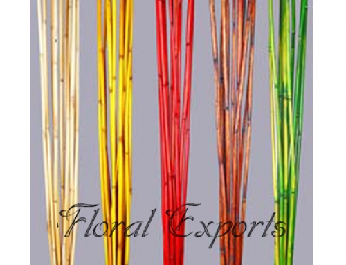Bamboo Reed Colour 1mtr