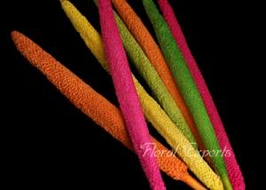 Bazra Colour