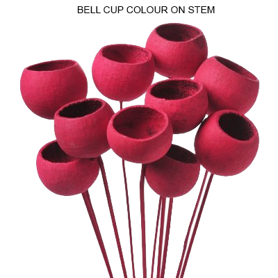 Bulk Bell Cup Colour on Stem Wholesale Supplies