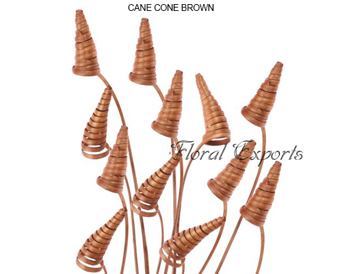 Cane Cone Brown - Dried Flowers Wholesale Suppliers