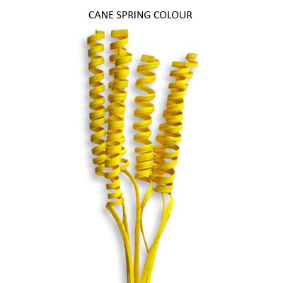 Cane Spring Colour