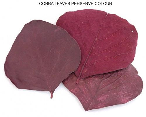 Cobra Leaves Preserve Red