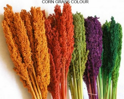 Corn Grass Colours - Dried Grass Bundle Wholesale