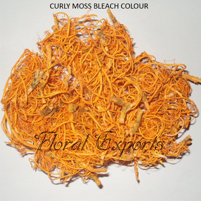 Curly Moss Orange
