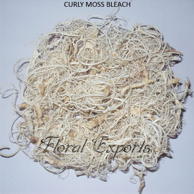 Curly Moss Bleach
