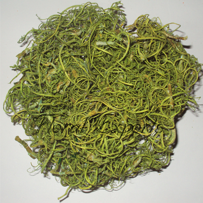 Curly Moss Sage Green - Wholesale Tamarind Fibre Suppliers
