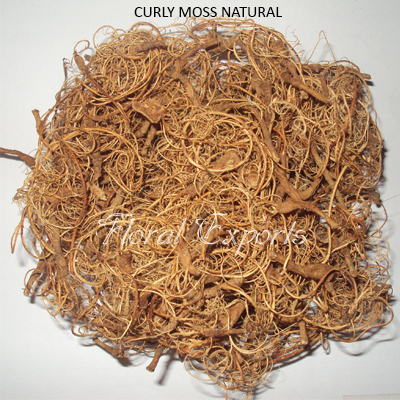 Curly Moss Natural