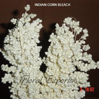 Corn Grass Bleach