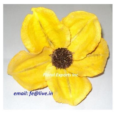 Jacarenda Flowers Yellow Loose