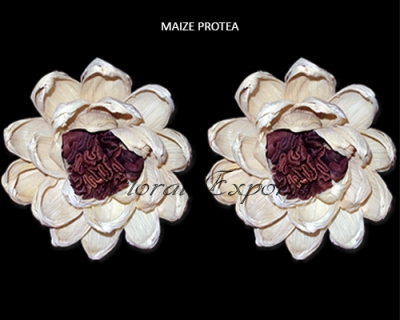 Maize Protea Flowers 10cm - Wholesale Maize Flowers Suppliers
