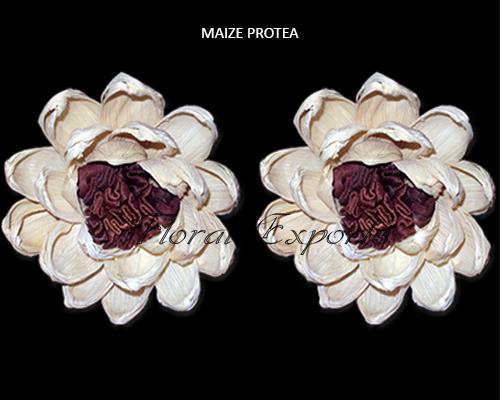 Maize Protea Flowers 10cm - Wholesale Maize Flowers Suppliers