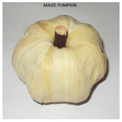 Maize Pumpkin - Dried Indian Handicrafts