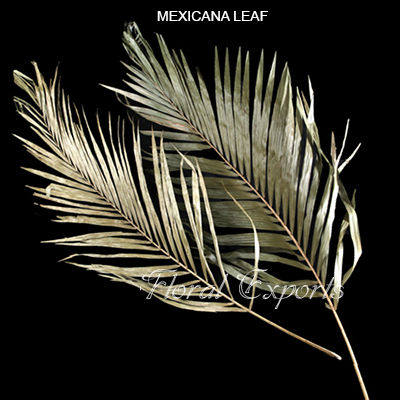 Mexicana Leaves Natural Full