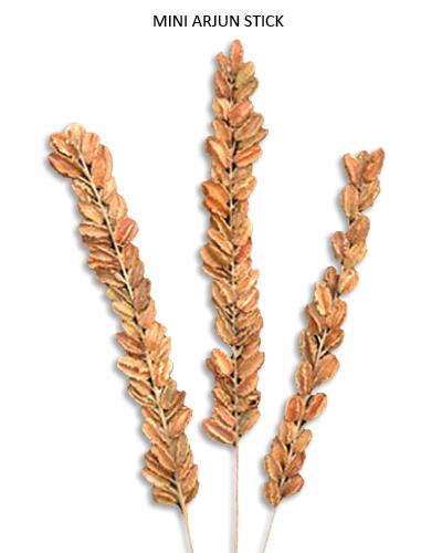 Mini Arjun Sticks Natural - Decoration Sticks Wholesale